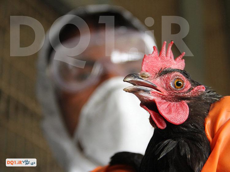 ویروس H5N1 ویروس آنفولانزا