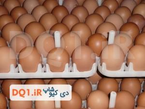 تخم مرغ نطفه دار