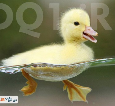 پرورش اردک اهلی