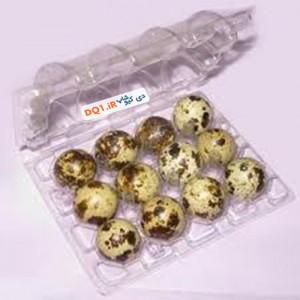 ظرف بسته بندی دکمه ای 12 عددی تخم بلدرچین | بسته 12 تایی تخم ...
