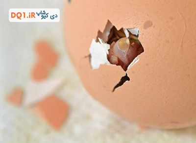 انتخاب تخم نطفه دار