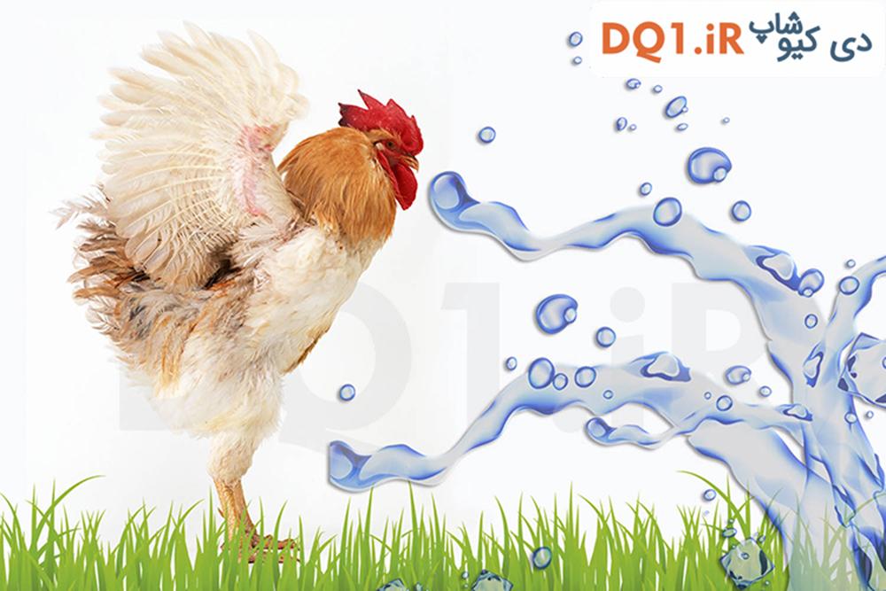 هچ تخم مرغ چیست