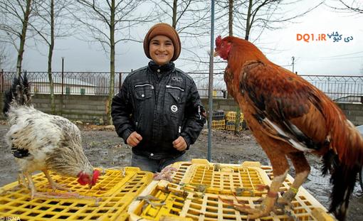 خرید تخم نطفه دار