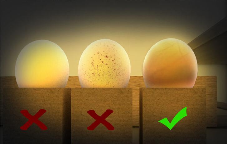 نطفه بینی تخم نطفه دار | دستگاه جوجه کشی