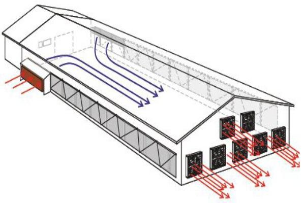 تهویه در سالنهای پرورش طیور (2)