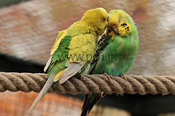 پرورش پرندگان تزئینی با دستگاه جوجه کشی