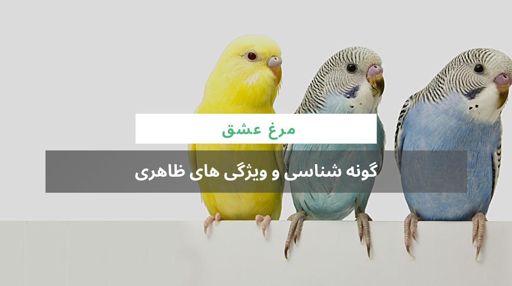 گونه شناسی مرغ عشق